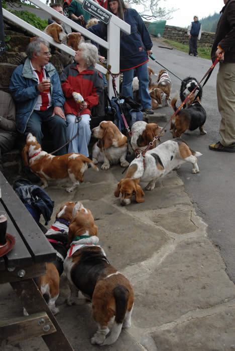 A basset rally calls in at the Birch Hall Inn for lunch